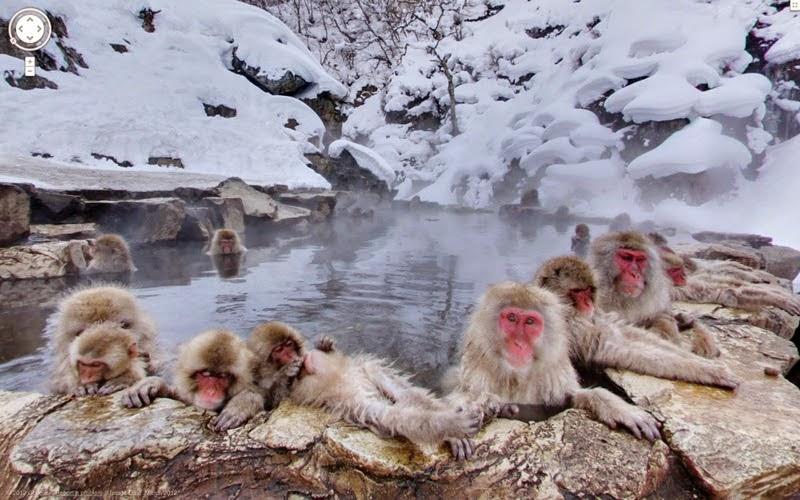 Taman Monyet Jigokudani
