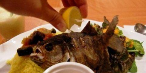Makan Piranha Goreng? Siapa Takut!